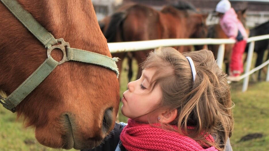 France Bans Unethical Trimming of Horse Whiskers