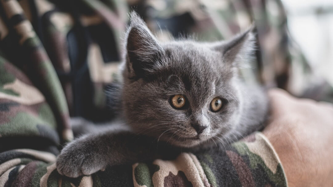 USDA Will Stop Experimenting On Kittens
