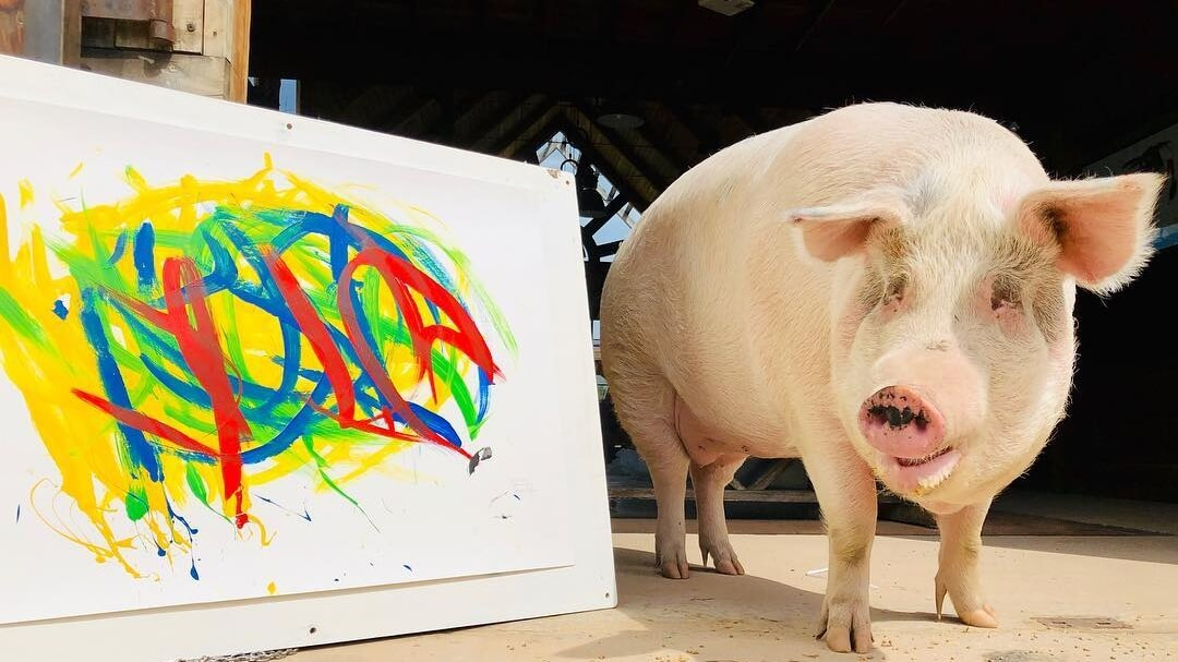 This Rescue Pig Named 'Pigcasso' Will Paint Your Portrait