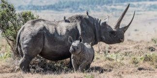 Wildlife Poaching Dropped 96% In 2 Years With New Tracking Tech