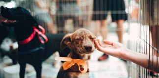 New York Could Ban Puppy Mill Pet Sales