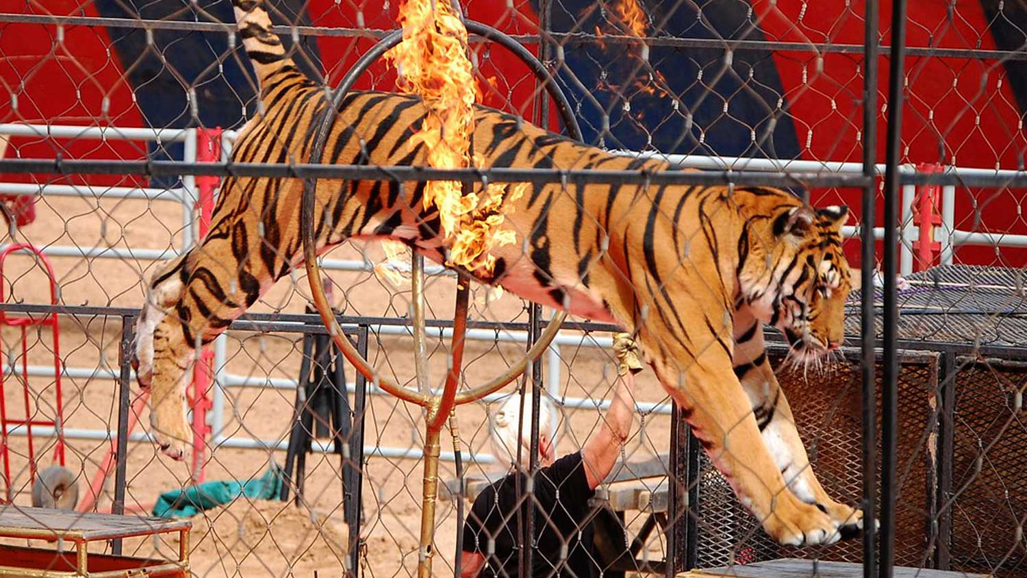 California Just Banned Wild Animals In Circuses (Updated October ...