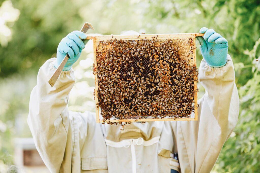 Is Honey Vegan? It's Complicated.