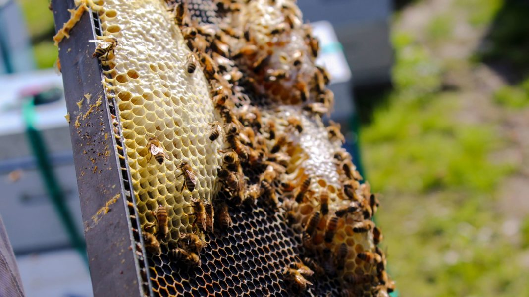 Is Honey Vegan? Why Bees Need It More Than We Do