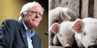 Factory Farms Are a Threat to America, Says Bernie Sanders