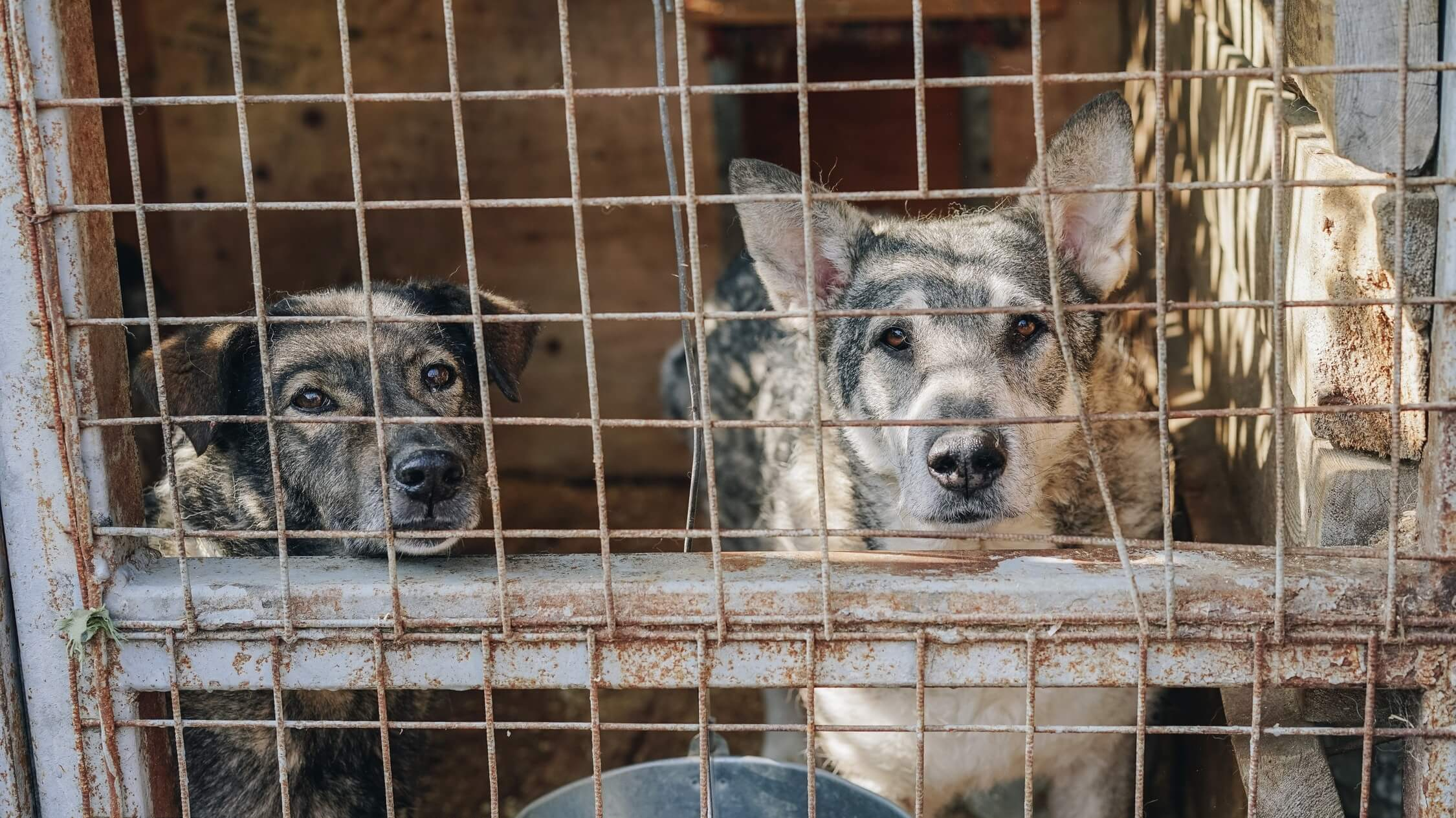 22 Dogs Rescued From Becoming Dinner at Shanghai Restaurant