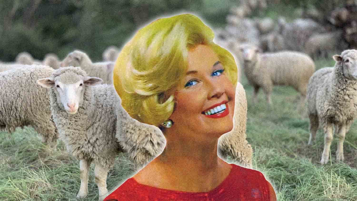 Doris Day May Have Left All of Her Money to the Animals
