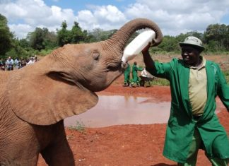 How Zambians Have Virtually Stopped Elephant Poaching