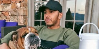 Lewis Hamilton Says Animal Cruelty 'Pains His Heart'