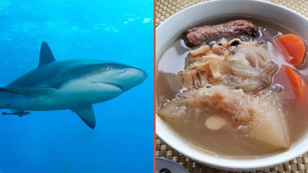 Shark Fin Imports and Exports Banned in Canada