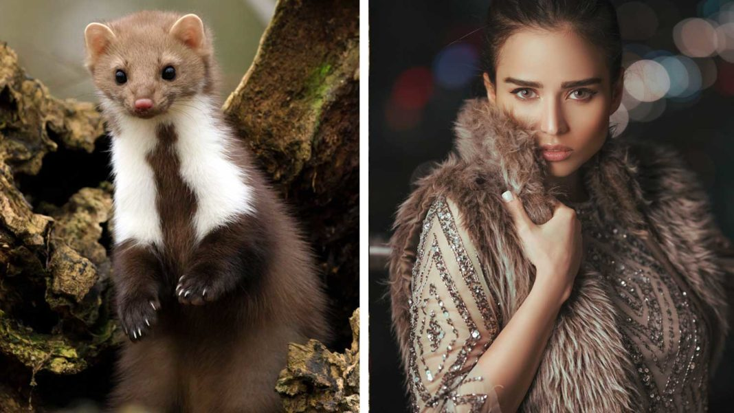 Ireland Fur Farm Ban Approved By Cabinet