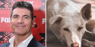 Simon Cowell Donates £25,000 to Shut Down Dog Meat Farms