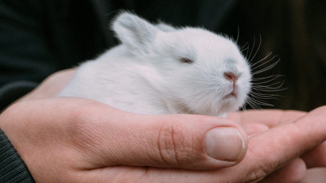 Nevada Is the 2nd State to Ban Cosmetics That Test on Animals