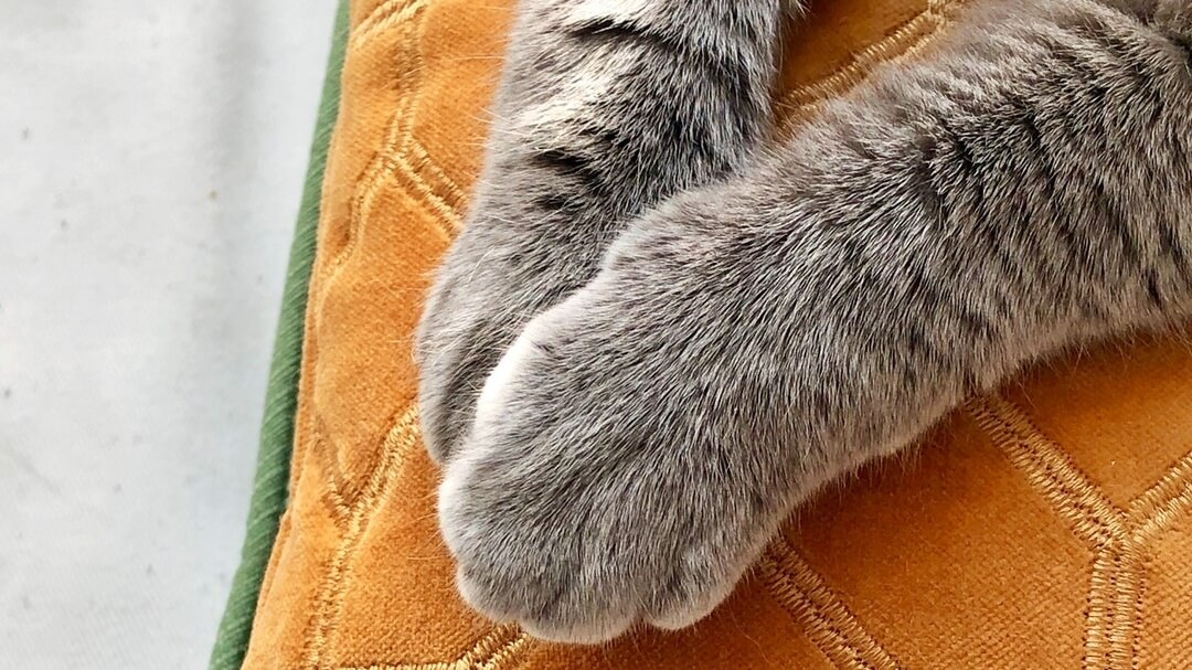 New York Just Became the First State to Ban Cat Declawing