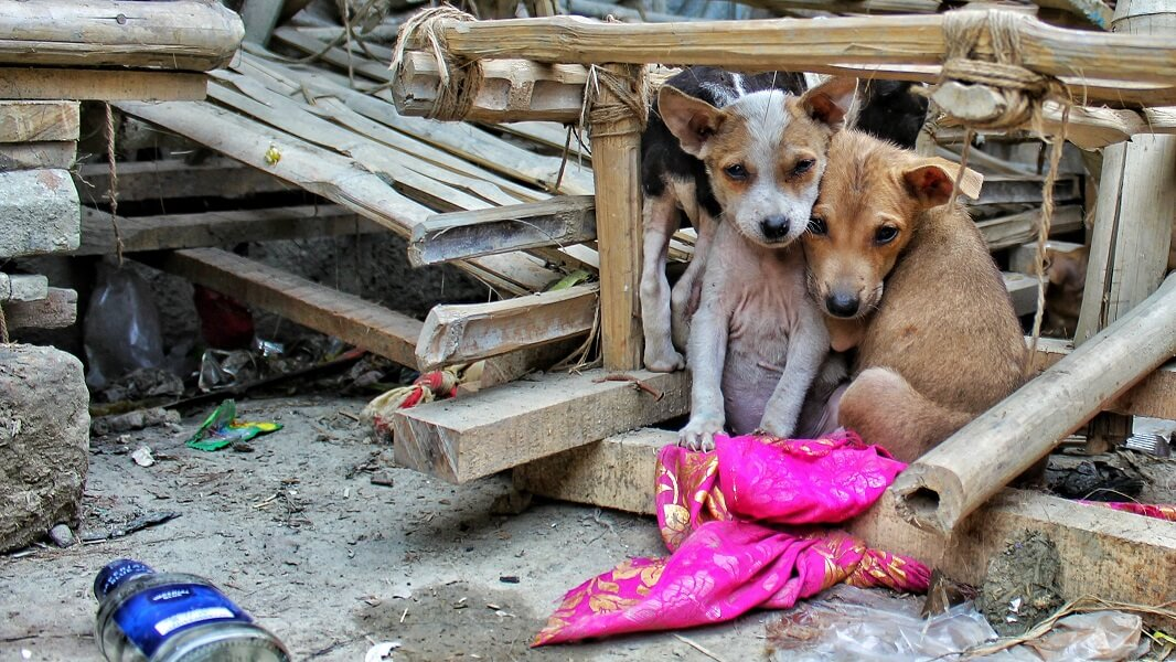 Indonesian District Becomes First to Ban Dog Meat
