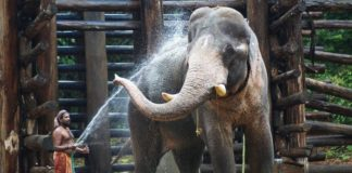 Animals Granted Same Rights as People, Indian Court Rules