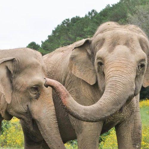 Alexandria Ocasio-Cortez Is Trying to Free the Bronx Zoo Elephant