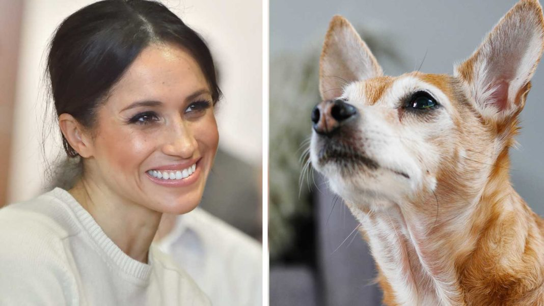 Meghan Markle Urges Fans to Support Pet Adoption