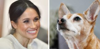 Meghan Markle Urges Fans to Support Pet Adoption
