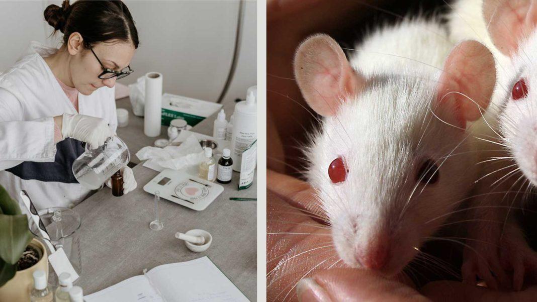 UK's Leading Animal Testing Lab to Shut Down