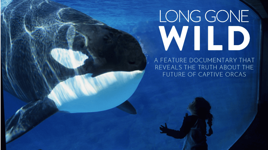 New 'Blackfish' Documentary Explores Shocking Reality of Whale Captivity