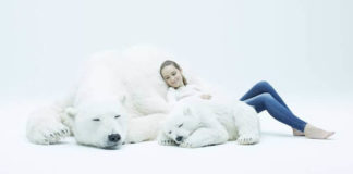 Snuggle With Lifelike Giant Polar Bears to Help Save Wildlife
