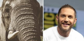Tom Hardy Condemns Elephant Poaching to 5M Fans