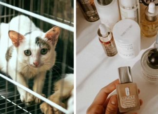 Animal Testing In the UK Drops to Lowest In 12 Years