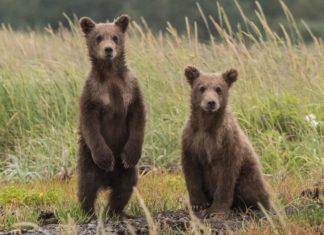 New Bill Earmarks $1.4 Billion for Endangered Species