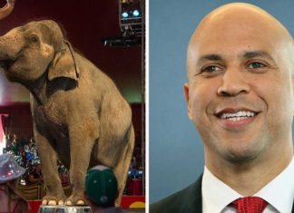 How Senator Cory Booker Is Trying to Ban Animal Circuses