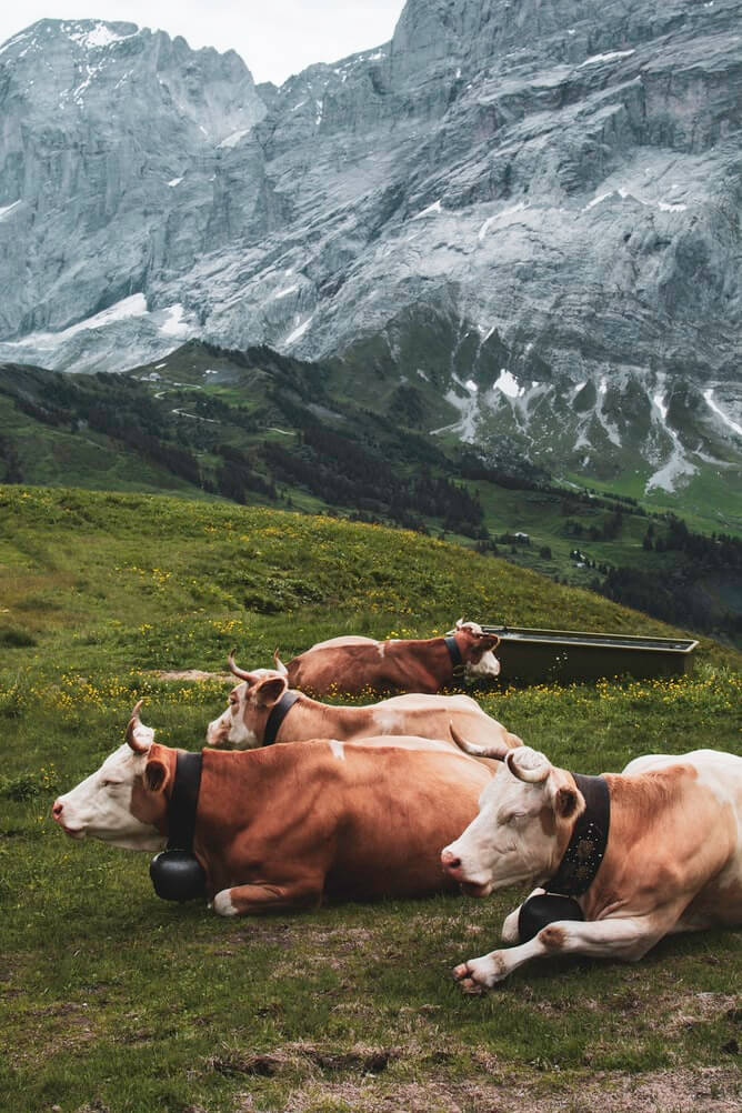 This Is Why Going Vegan Is Better for the Environment