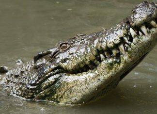 If 200-Million-Year-Old Crocodiles Were Vegan, You Can Be Too