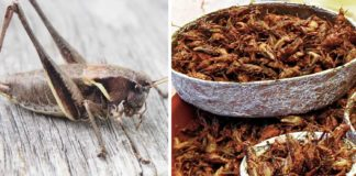 Lab-Grown Bug Meat Is the Cruelty-Free Protein Of the Future