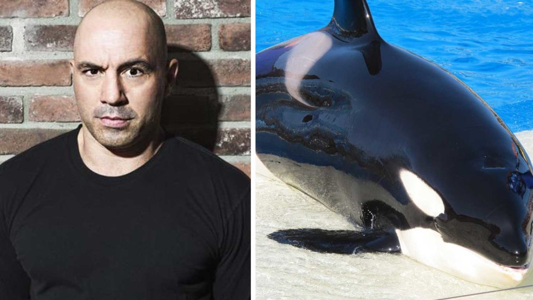 Even Joe Rogan Thinks SeaWorld Is 'Slavery'