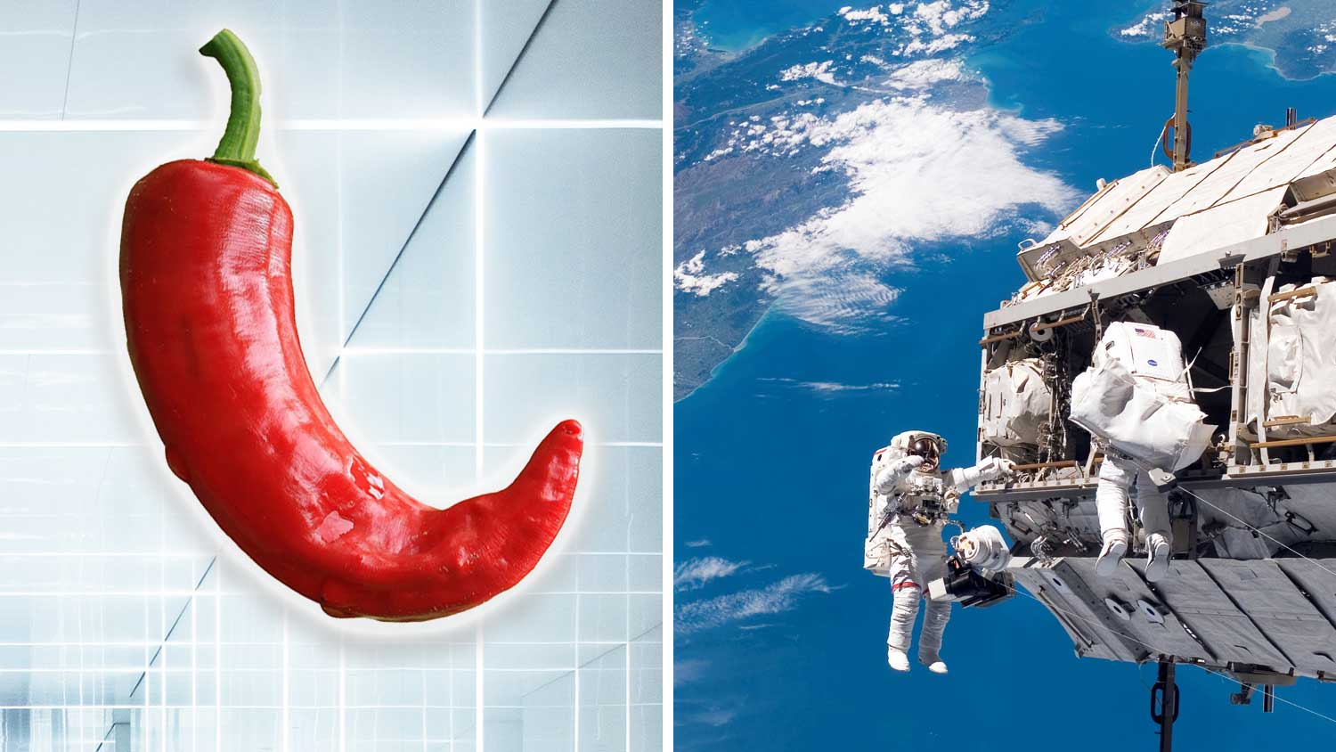 NASA Is Growing Chili Peppers In the Space Station