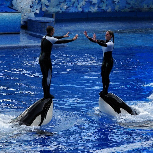 Virgin Holidays Axes SeaWorld's Captive Whale and Dolphin Tours
