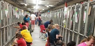People Are Comforting Scared Shelter Dogs During 4th July Fireworks