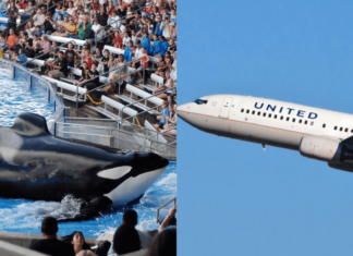 United Airlines Just Cut All Ties With SeaWorld