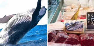 Japanese Lose Taste for Whale Meat As Whaling Returns