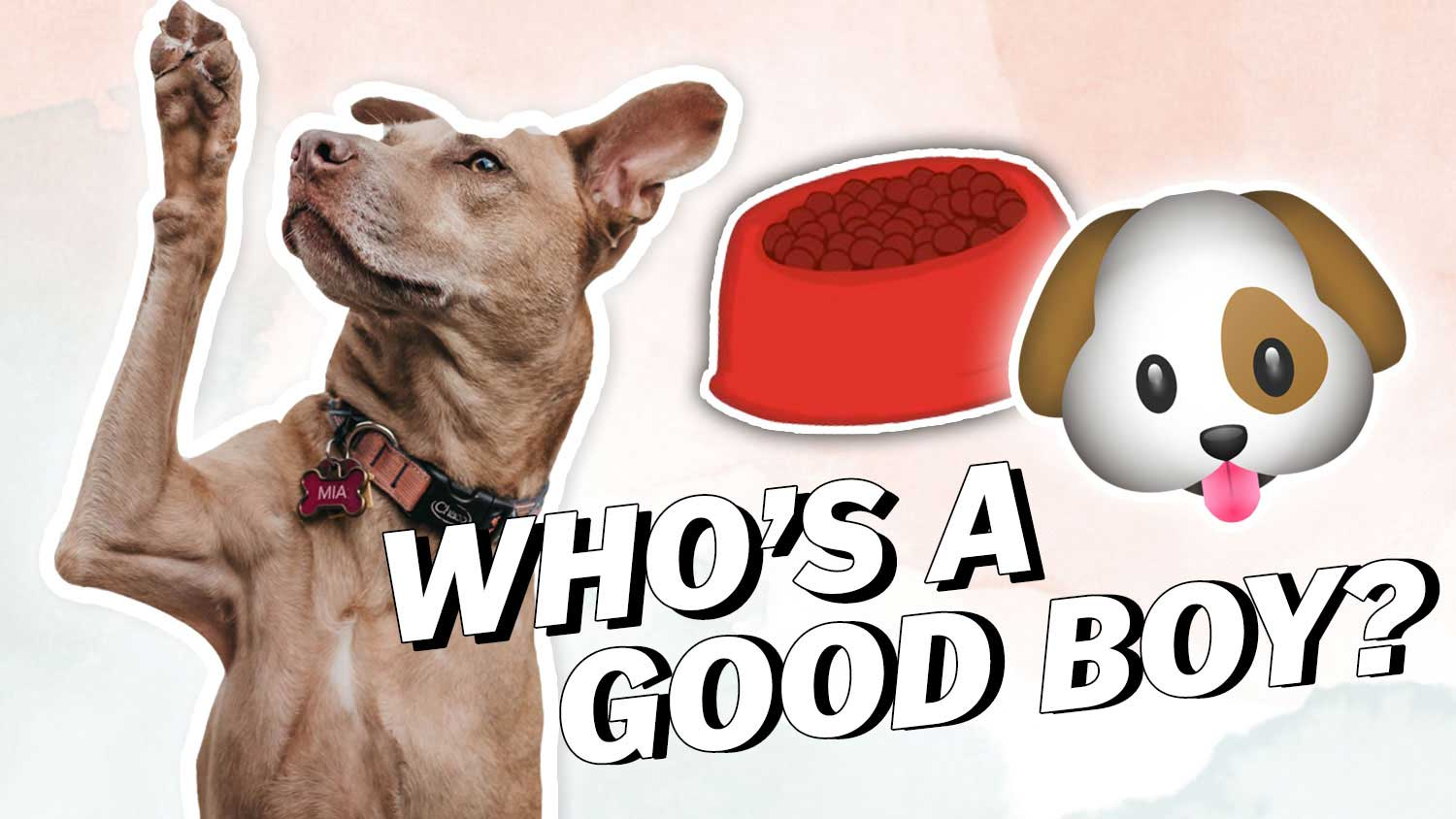 This Untapped Protein Source For Dogs Is Sustainable
