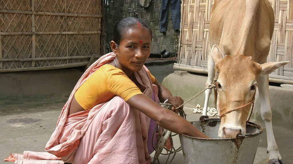 Milk Sales Drop 40% In Bangladesh As Consumers Fear Antibiotics