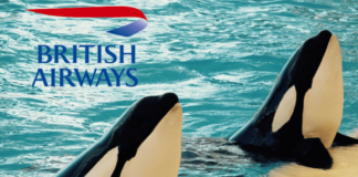 British Airways Is the Latest to Cut All Ties With SeaWorld