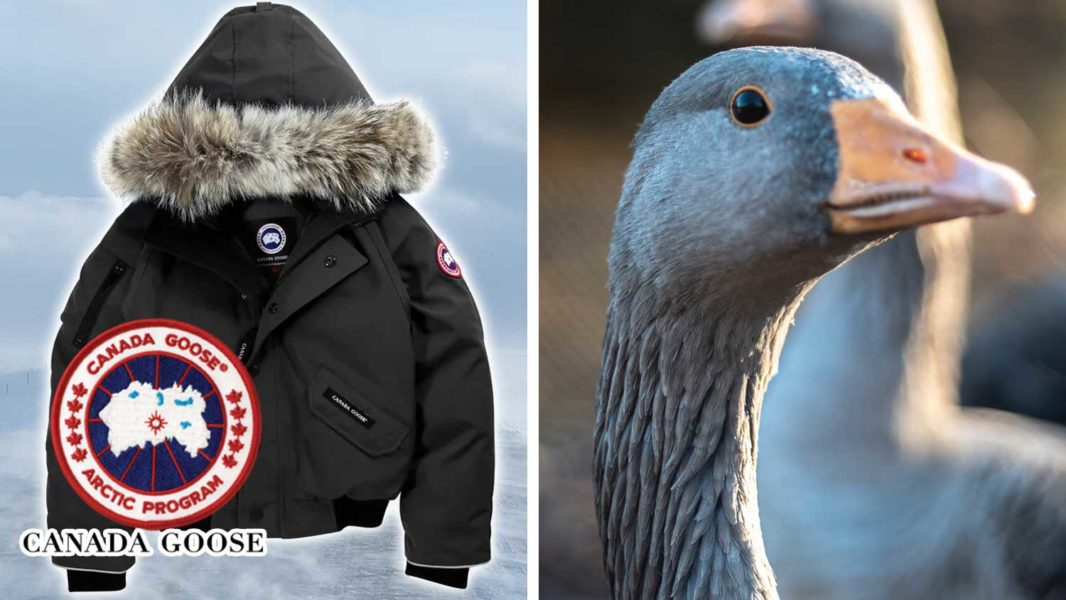 Canada Goose May Finally Realize Down Is Unethical