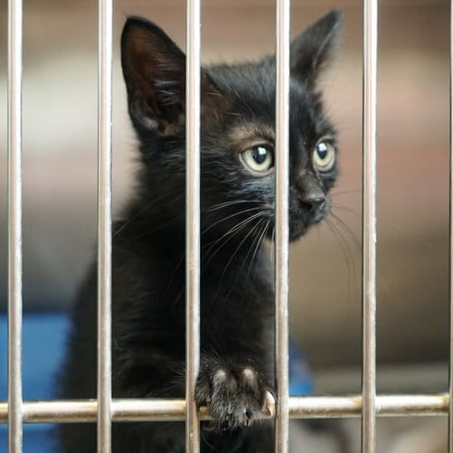Delaware Becomes the First No-Kill State for Shelter Animals