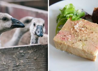 The Last Foie Gras Farm In Ukraine Just Shut Down