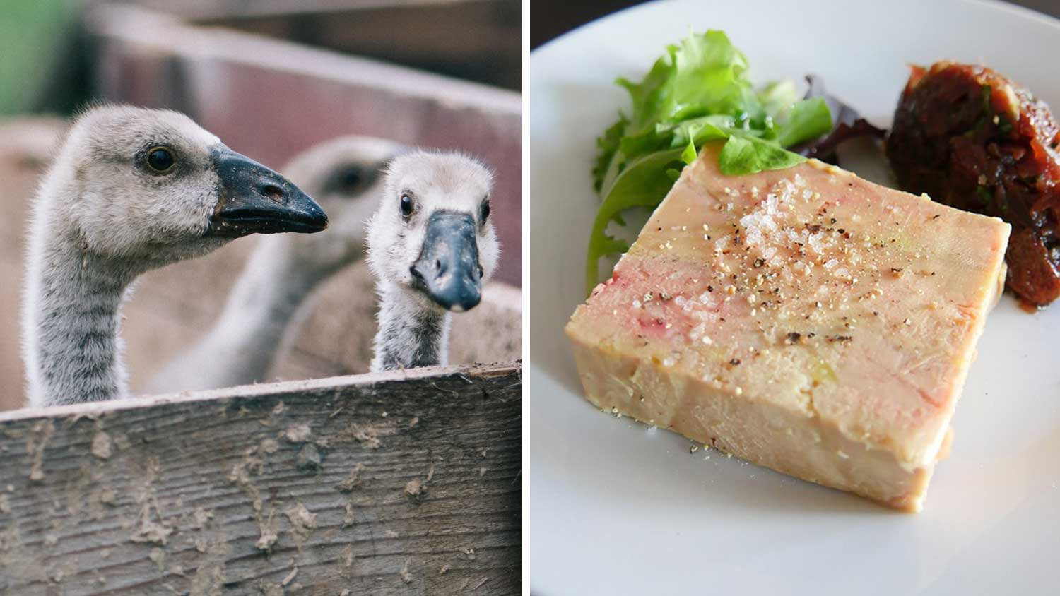 The Last Foie Gras Farm In Ukraine Is Shutting Down