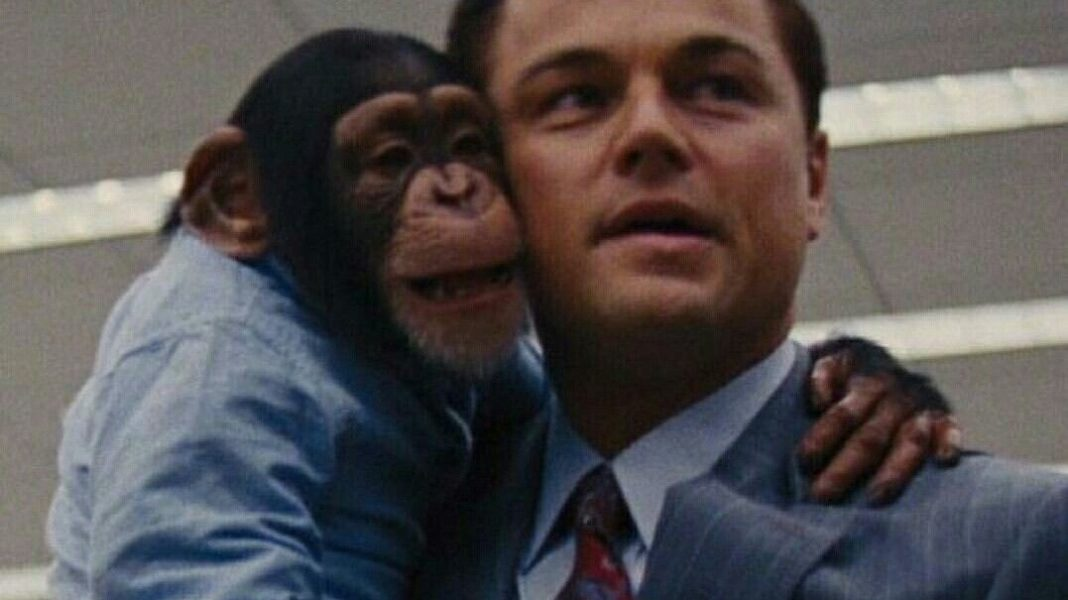 Leonardo DiCaprio May Rescue the Chimp From 'Wolf of Wall Street'