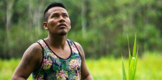 Peru Passes 'Momentous' Ban on Palm Oil Deforestation