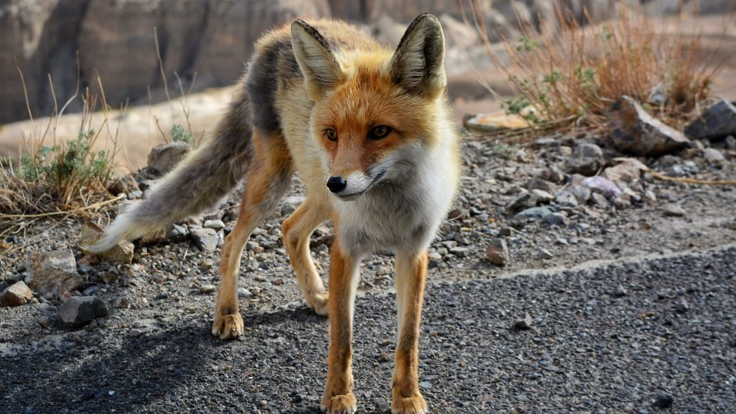 California Becomes First State to Ban Fur Trapping
