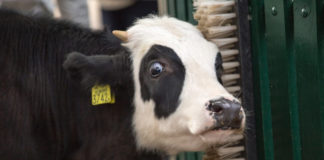 Switzerland May Soon Ban All Factory Farms